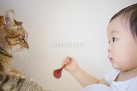 スプーンと器を持った幼児と猫の写真素材 [FYI01665836]