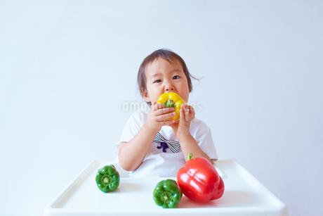 ベビーチェアーに座ってパプリカを食べる幼児の写真素材 [FYI01665874]