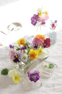 ガラスの小物とビオラの写真素材 [FYI01666273]