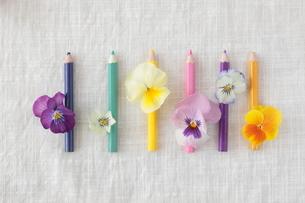 色鉛筆とビオラの写真素材 [FYI01666281]