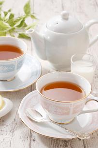 紅茶イメージの写真素材 [FYI01667563]