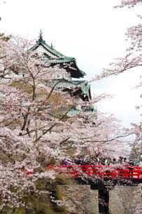 弘前城と桜の写真素材 [FYI01668819]
