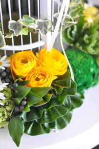 鳥籠のまわりのバラとラナンキュラスのアレンジの写真素材 [FYI01668831]