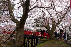 弘前城と桜の写真素材 [FYI01668940]