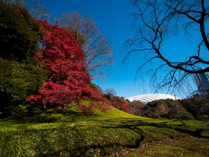 東京ドームと紅葉の写真素材 [FYI01669203]