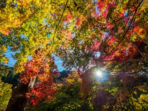 色づく高尾山の秋の写真素材 [FYI01669487]