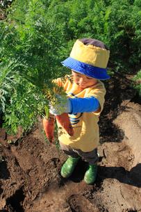 人参を収穫する男の子の写真素材 [FYI01669518]