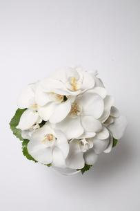 胡蝶蘭のウェディングブーケ、花束の写真素材 [FYI01669557]