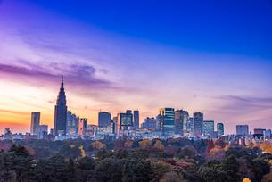 新宿ビル群の夜景の写真素材 [FYI01669711]