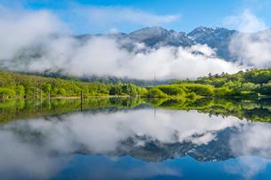 新緑の上高地 大正池の写真素材 [FYI01669726]