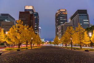 東京駅ライトアップとイチョウ並木の写真素材 [FYI01670115]