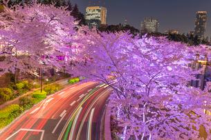 東京ミッドタウンの桜の写真素材 [FYI01670240]