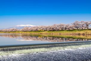蔵王山と白石千本桜の写真素材 [FYI01670482]