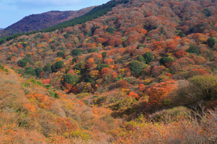 紅葉に染まる箱根の山々の写真素材 [FYI01670878]