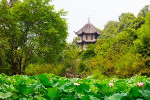 夏の緑に覆われた杜甫草堂・一覧亭の写真素材 [FYI01670926]