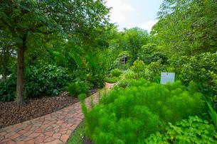 緑豊かなシンガポール植物園の写真素材 [FYI01670997]