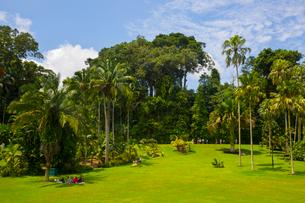 緑豊かなシンガポール植物園の写真素材 [FYI01671191]