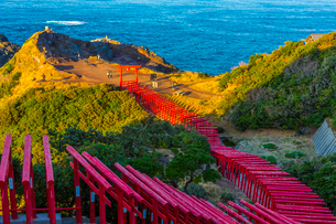 夕景の元乃隅稲成神社の写真素材 [FYI01671418]
