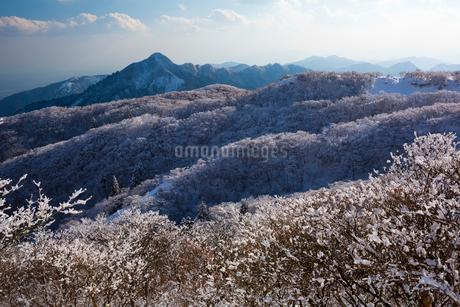 御在所の樹氷の写真素材 [FYI01671480]