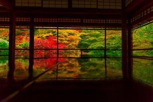 紅葉の瑠璃光院の写真素材 [FYI01671695]