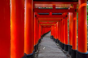 伏見稲荷大社の鳥居の写真素材 [FYI01671721]