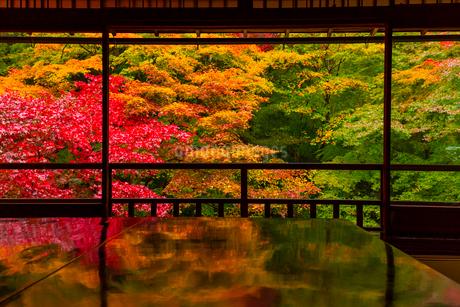 紅葉の瑠璃光院の写真素材 [FYI01671744]