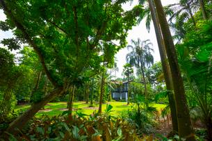 緑豊かなシンガポール植物園の写真素材 [FYI01671944]