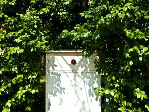 消火栓と木々の写真素材 [FYI01672048]