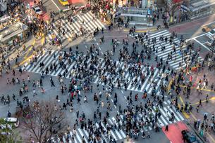 渋谷の交差点 アップの写真素材 [FYI01672513]