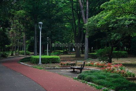公園のベンチの写真素材 [FYI01673819]