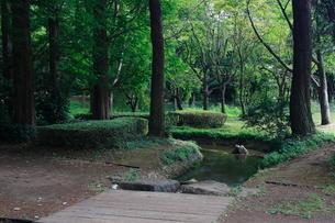 公園の小川の写真素材 [FYI01673823]