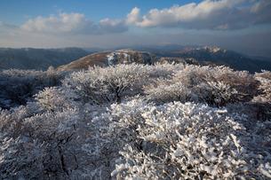 御在所の樹氷の写真素材 [FYI01673881]