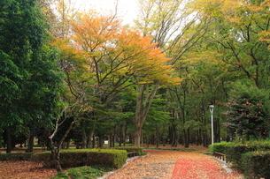 公園の遊歩道の写真素材 [FYI01674276]