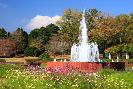 茨城県植物園の写真素材 [FYI01674308]