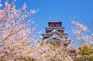 桜と広島城の写真素材 [FYI01674769]