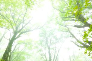 霧と新緑の森の写真素材 [FYI01674879]