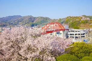 音戸大橋と桜の写真素材 [FYI01674918]