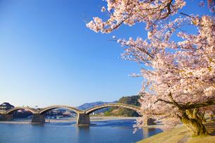 桜の錦帯橋の写真素材 [FYI01675029]