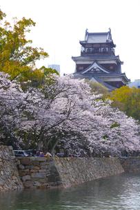 桜と広島城の写真素材 [FYI01675070]
