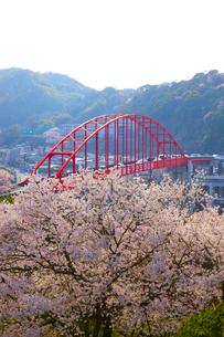 音戸大橋と桜の写真素材 [FYI01675153]