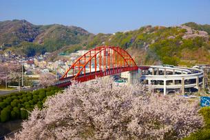 音戸大橋と桜の写真素材 [FYI01675164]