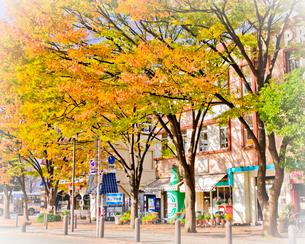 秋の海岸通りの写真素材 [FYI01675331]