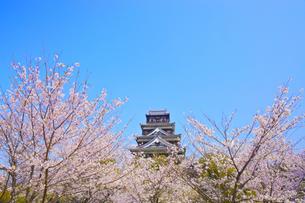 桜と広島城の写真素材 [FYI01675501]