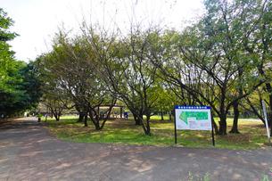 県営和光樹林公園の写真素材 [FYI01678433]