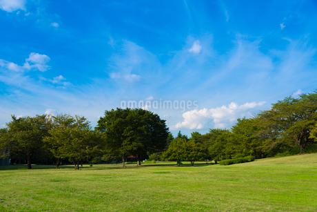光が丘公園の緑の写真素材 [FYI01678765]