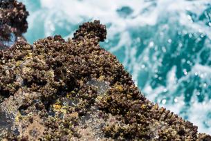 フジツボと波しぶきの写真素材 [FYI01679973]