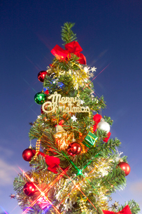 クリスマスツリーの写真素材 [FYI01680407]