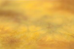 もみ染めの楮和紙の写真素材 [FYI01680639]