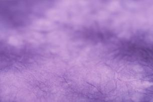 もみ染めの楮和紙の写真素材 [FYI01680787]