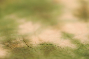 もみ染めの楮和紙の写真素材 [FYI01680879]